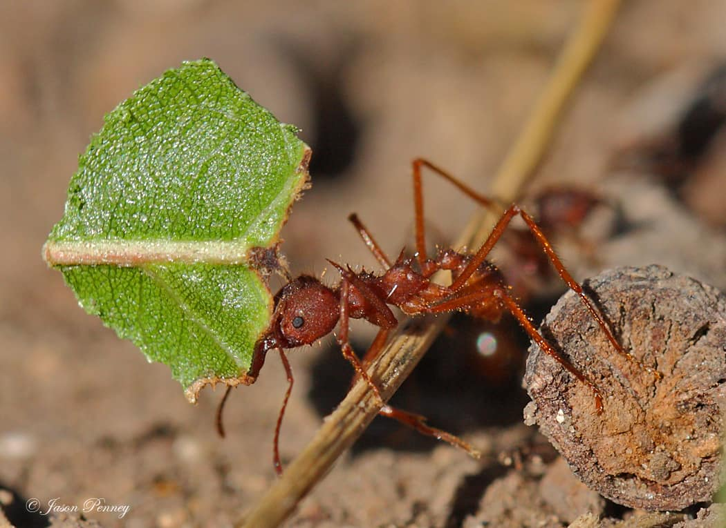 Comment les fourmis se protègent du froid?