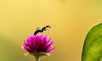 100 faits amusants sur les fourmis